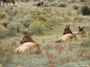 68. Yellowstone National Park