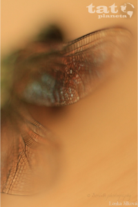 10. Na křídlech vážky