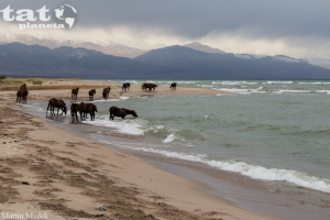 48. Koně u jezera Issyk-Kul